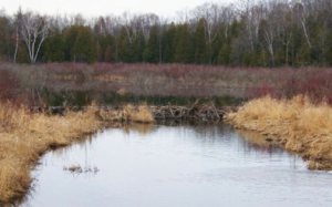 Beaver Dam photo by Fiona Reid