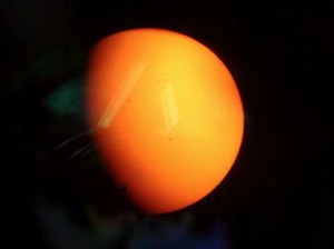 Venus (small dark circle) entering face of sun, Acton Library, June 5, 2012. Photo made with hand-held digital camera and telescope. Photo by W.D. McIlveen.