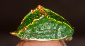 moth425