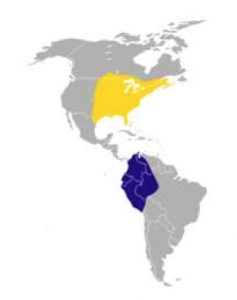"""Figure 1. Chimney Swift range map, with wintering habitat in South America, and summer habitat in eastern North America. Source: """"Chimney Swift range"""" by America_Federal_Provincial_y_Departamental is licensed under CC BY 3.0"""